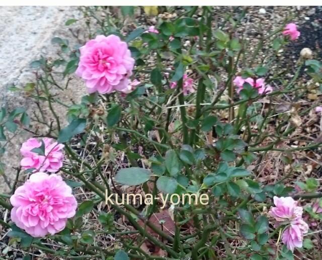 f:id:kuma-yome:20161120232457j:image