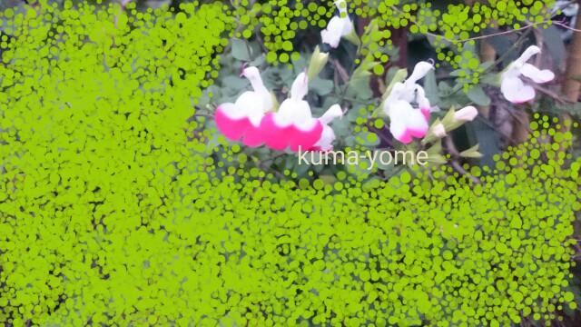 f:id:kuma-yome:20161126182740j:image