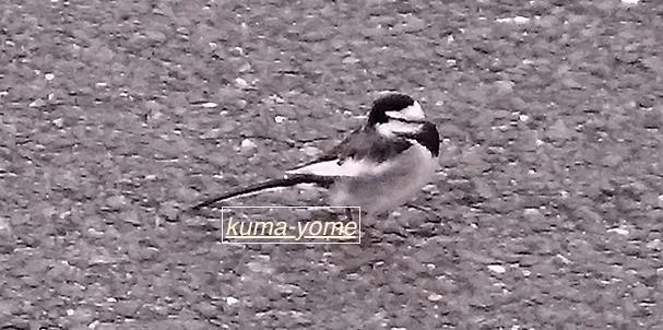 f:id:kuma-yome:20170108215742j:plain