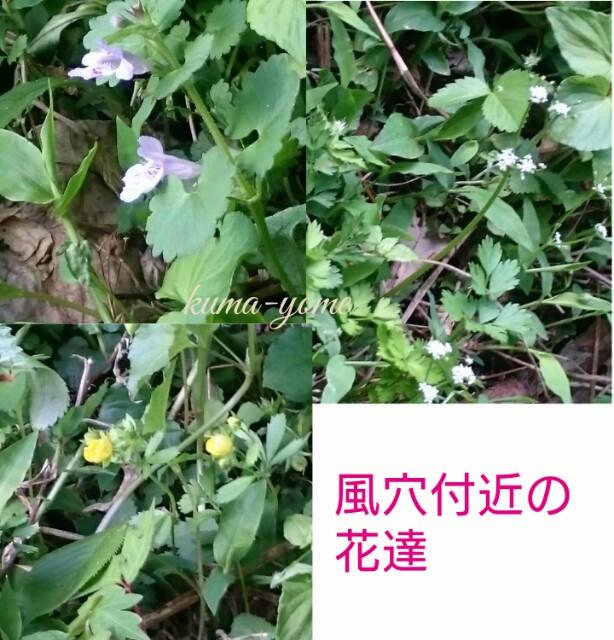 f:id:kuma-yome:20170522224651j:image