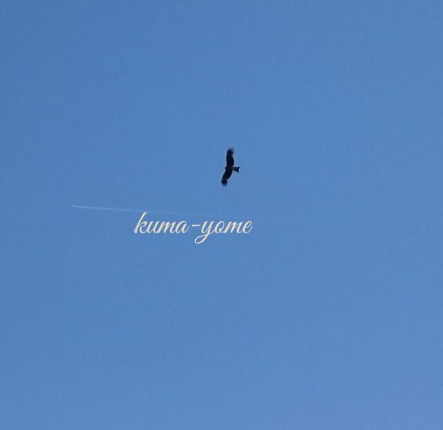 f:id:kuma-yome:20170522232046j:image