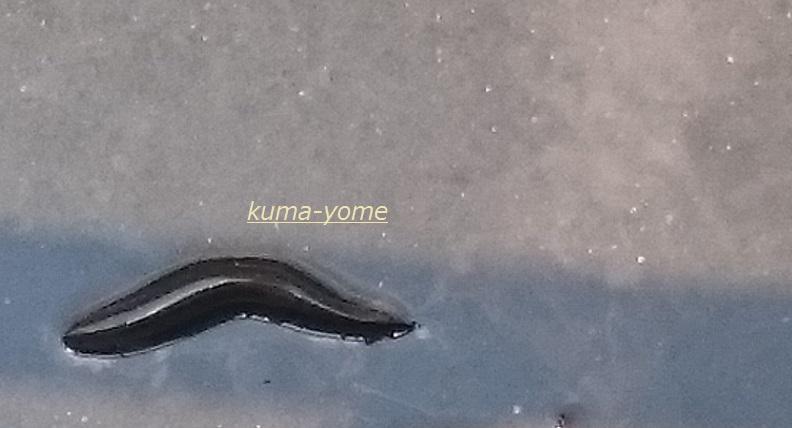 f:id:kuma-yome:20170611233350j:plain