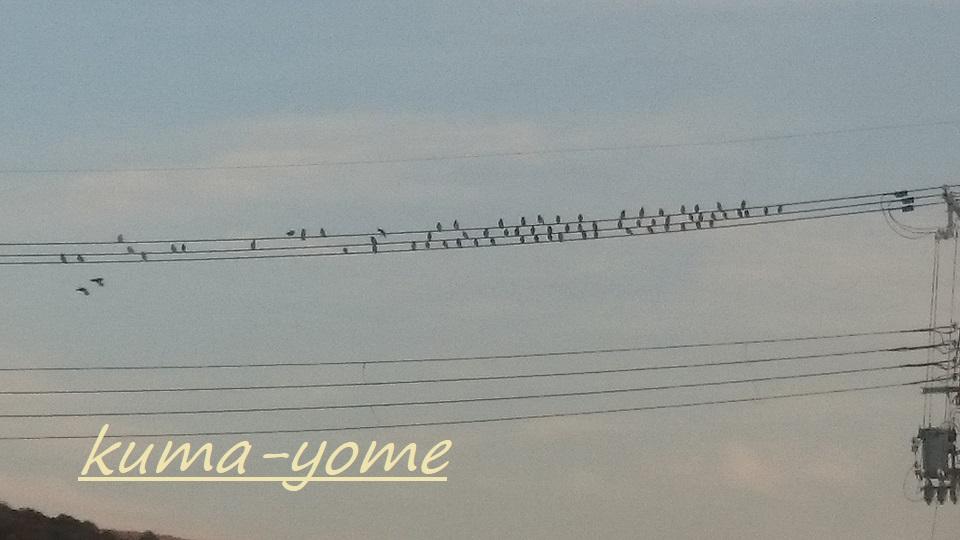 f:id:kuma-yome:20180320115533j:plain