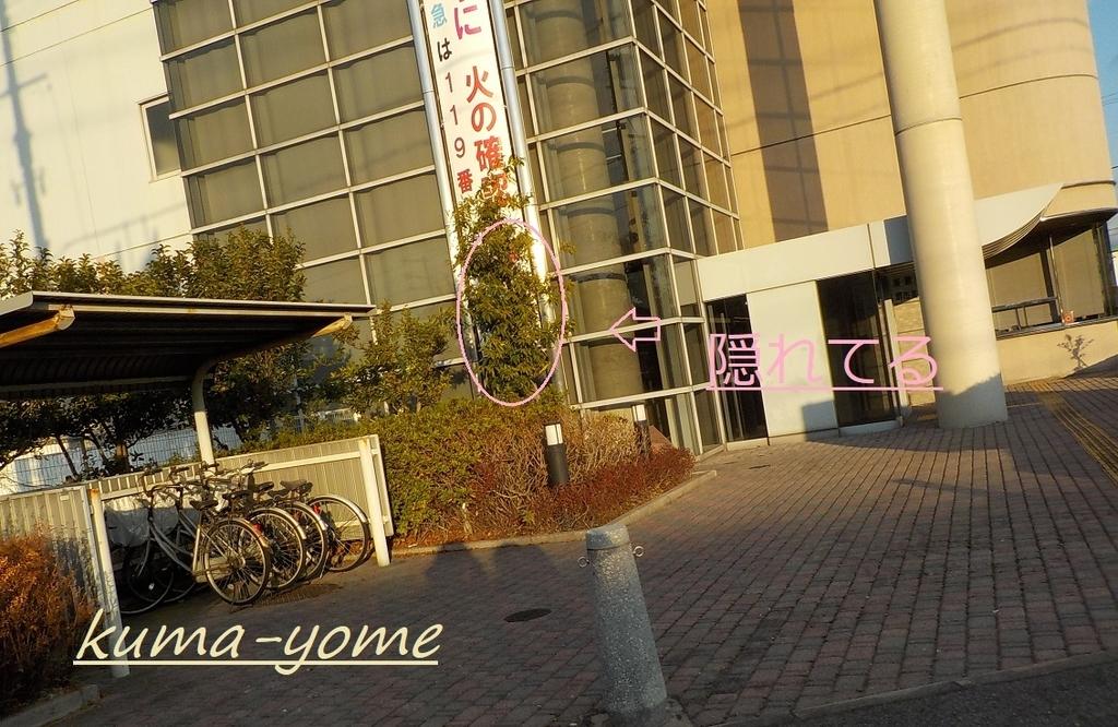 f:id:kuma-yome:20190207222532j:plain