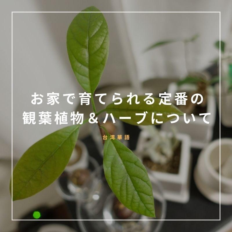 f:id:kuma110:20210106185048j:plain