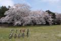 [桜]2016403根岸家2