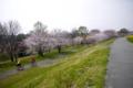 [桜]2016403 荒川周辺1