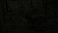[2009年][山梨県一色地区][ホタル][ハナ]