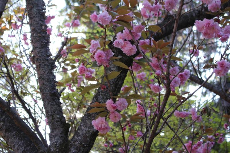 f:id:kumadanone_pink:20170423160115j:image