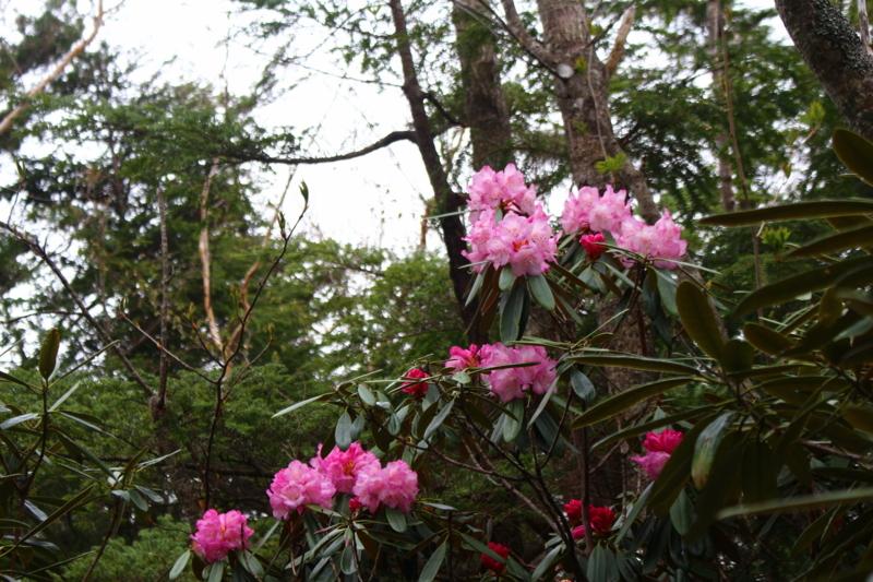 f:id:kumadanone_pink:20170528091223j:image