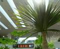 [旅][2009.10沖縄]ひとりごと