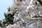 2011-04-10武庫川の桜1