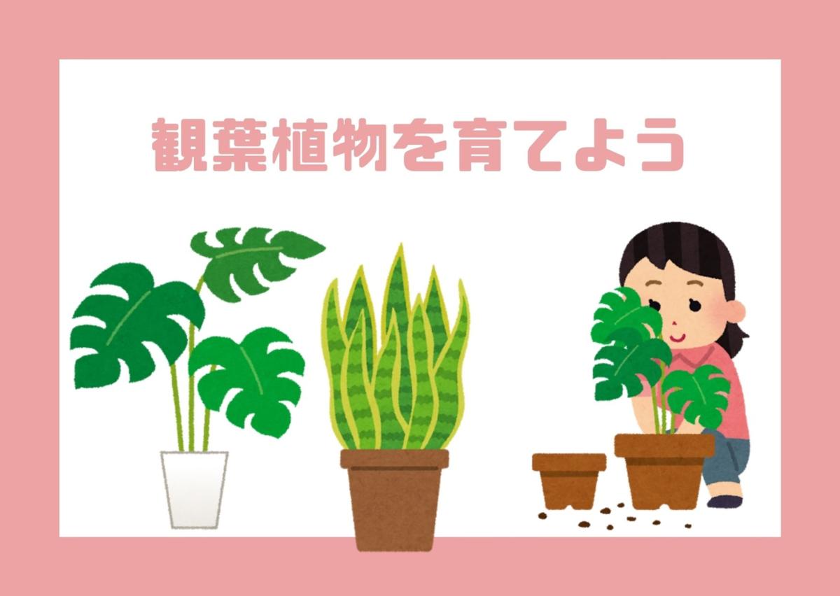 観葉植物を育てよう