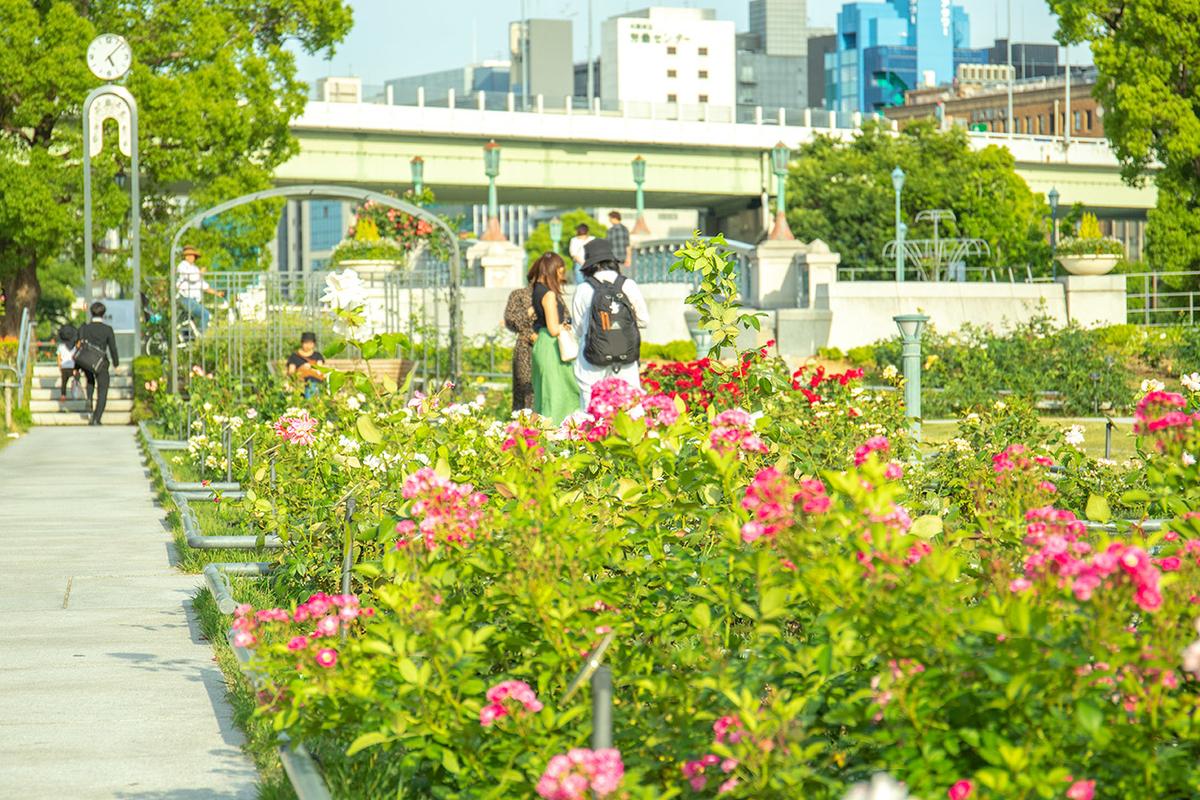 大阪中之島バラ園