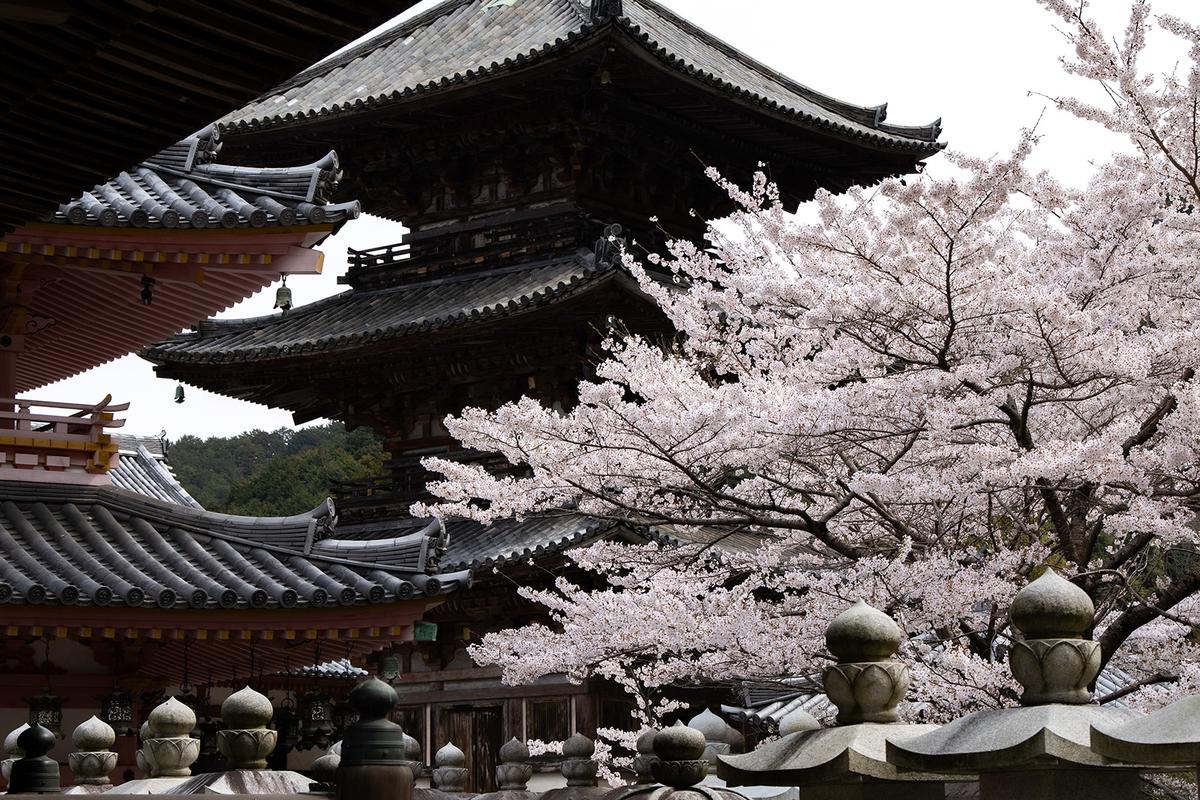 桜大仏で有名な奈良県壷阪寺