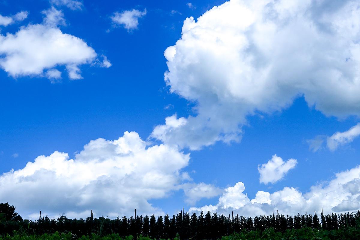 奈良県平群町小菊畑と夏の空