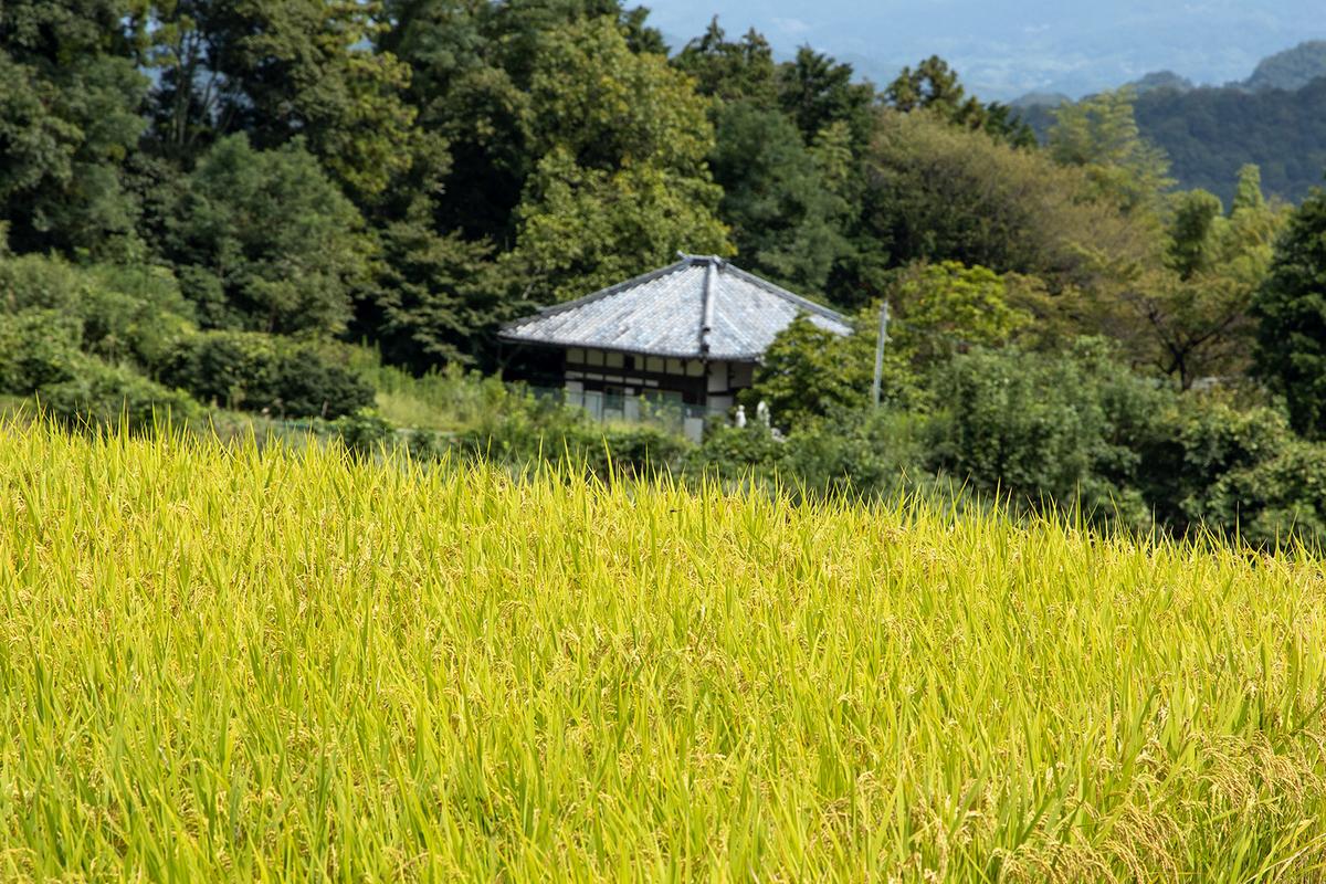 奈良県葛城市天空の田んぼ