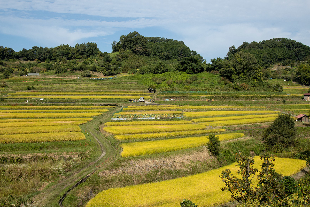 稲渕の棚田