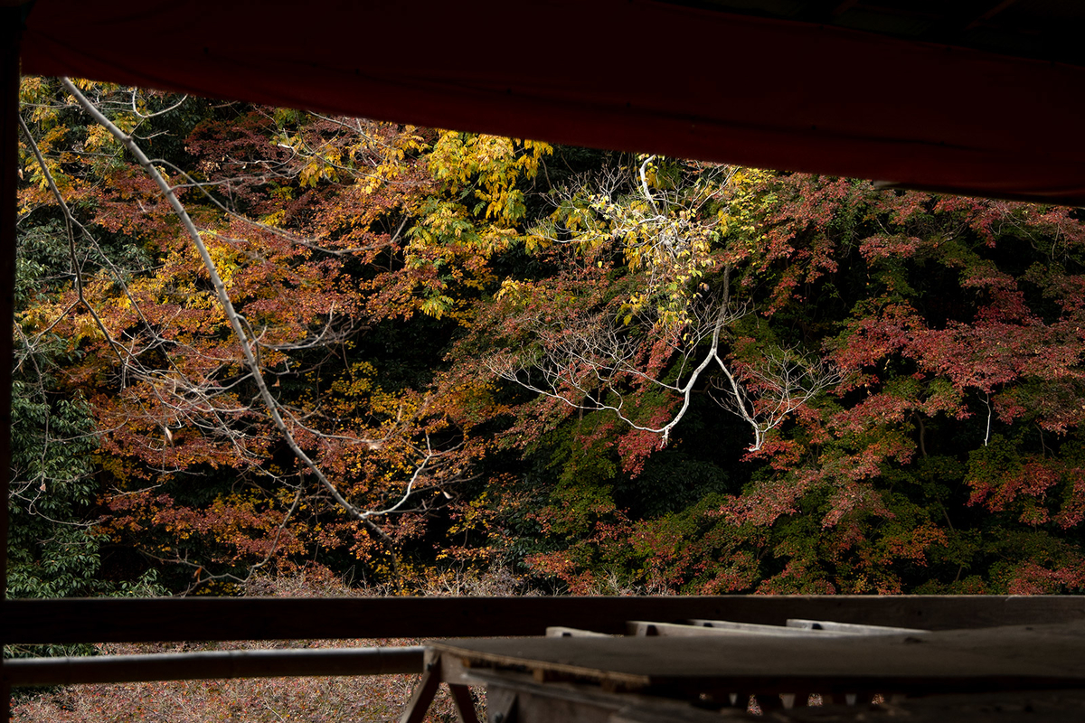 奈良県吉野の紅葉