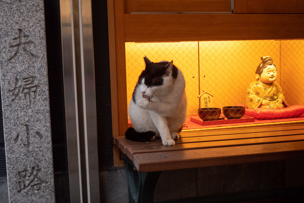 法善寺横丁の野良ネコ