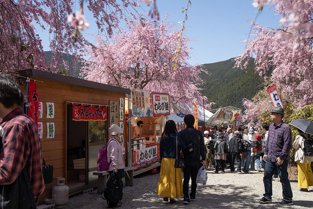 奈良県の桜の名所高見の郷