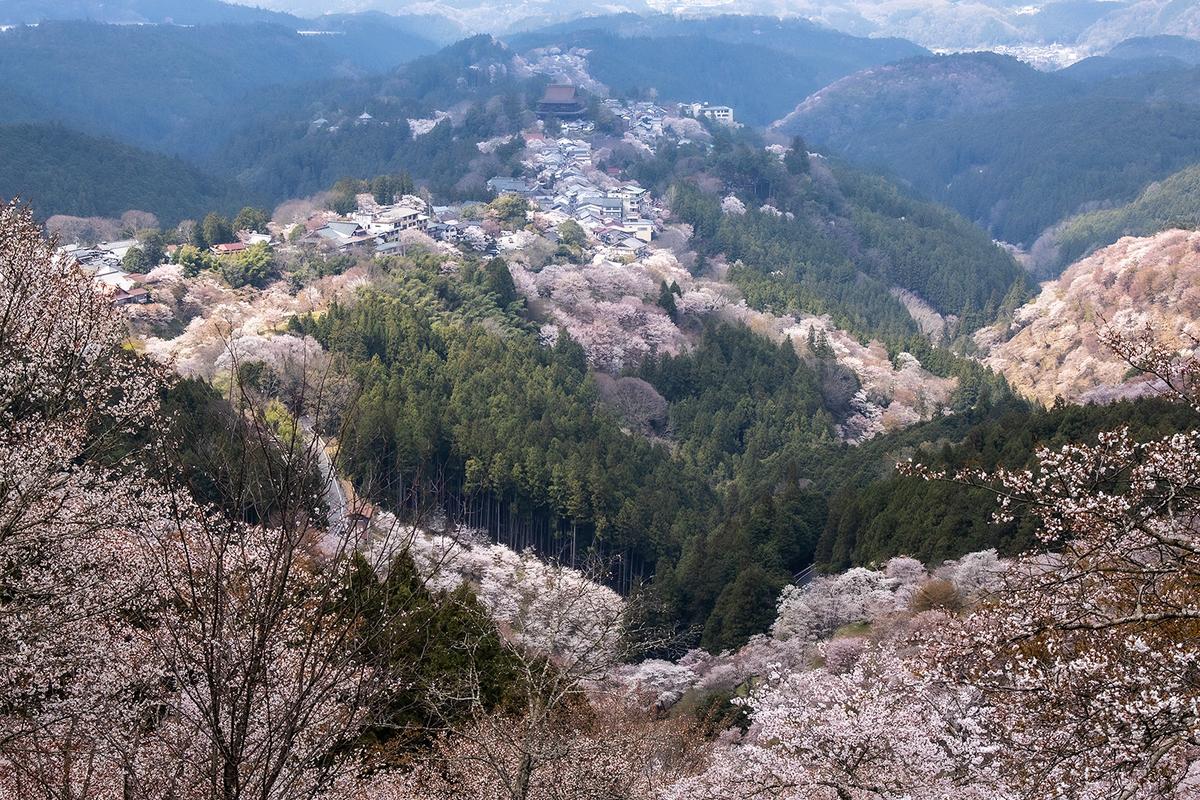 奈良県の桜の名所 吉野山
