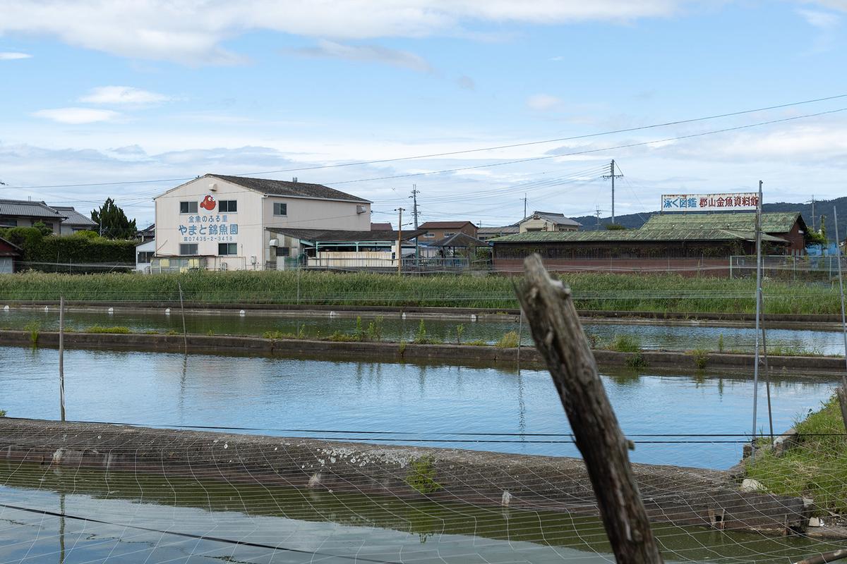 金魚の産地で有名な奈良県大和郡山市のやまと錦魚園