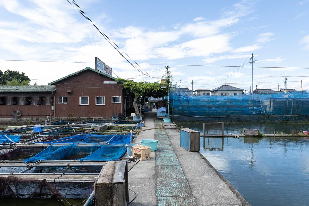 金魚の産地で有名な奈良県大和郡山市のやまと錦魚園で金魚観賞