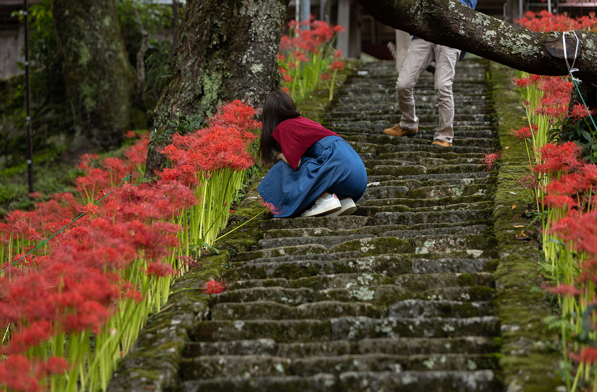 佛隆寺の彼岸花