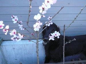 f:id:kumakumamusic01:20080326111829j:image