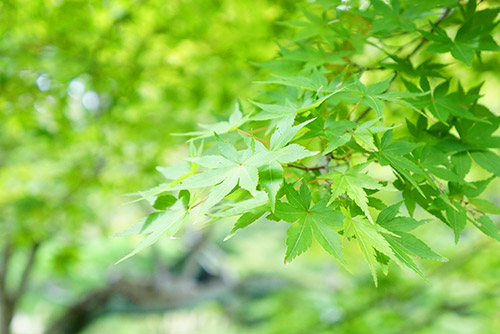 緑が豊富な東山植物園