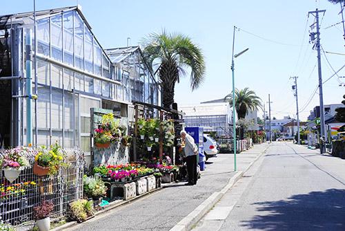 名古屋の坪井健樹園の温室
