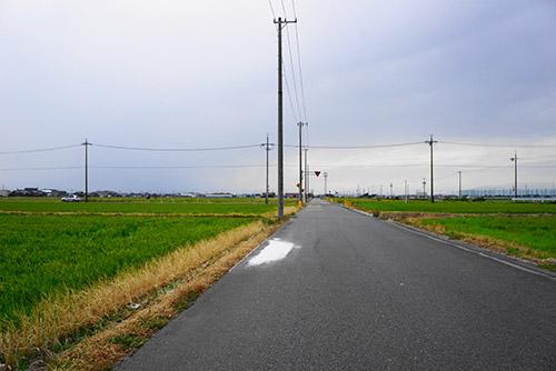 愛知県飛島村のたんぼ