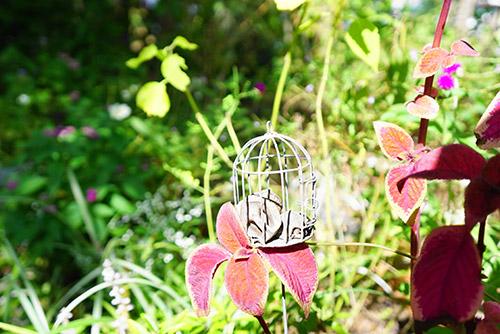 けやきの杜のお庭