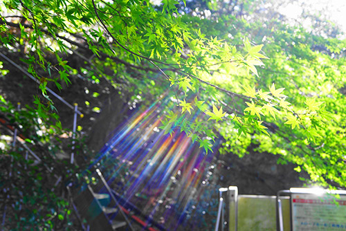 犬山寂光院の下り階段の途中で撮影した綺麗な自然光