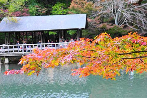 東山植物園の11月16日現在の紅葉の様子