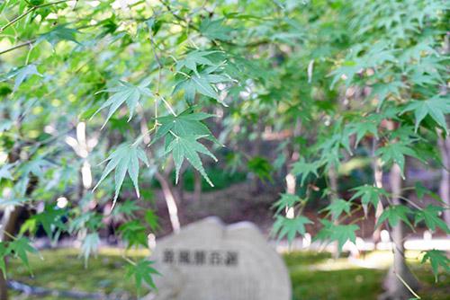 11月16日の東山植物園のもみじ