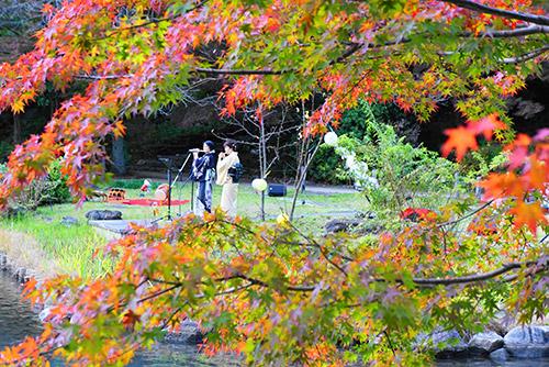 11月16日の東山植物園