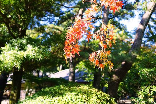 名古屋城の紅葉