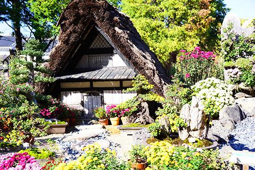 菊のミニハウス