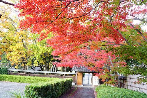 城南亭の紅葉