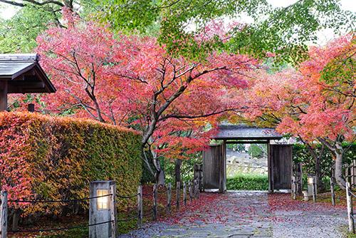城南亭の和庭園の紅葉
