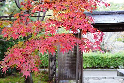 城南亭の和庭園の紅葉がとてもきれい