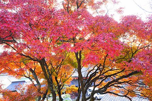 犬山成田山の紅葉