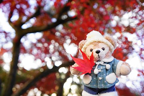 犬山城の紅葉とモデルのダッフィー
