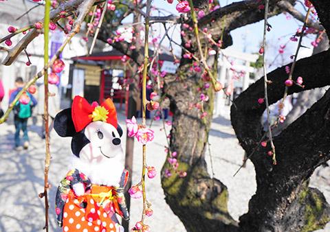 梅の花とぬいもーずミニーマウス