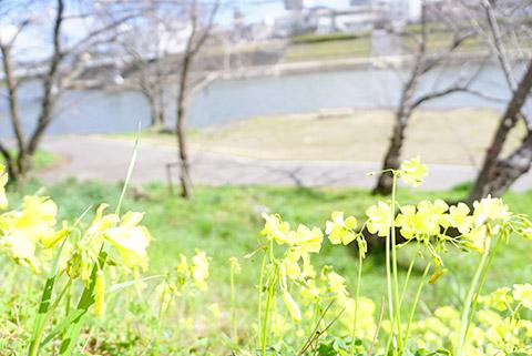 かわいい黄色の花