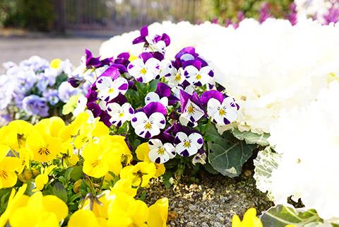 戸田川緑地の春の花