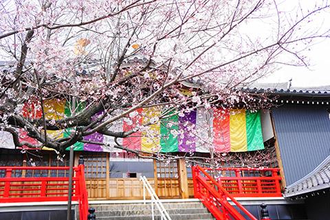 大黒天拝殿のとなりの拝殿の桜