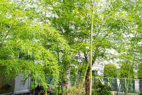 宝珠院の竹藪